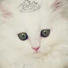 Glitter Kitty