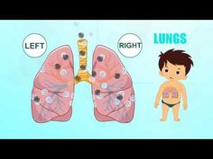 Learn about Human Body Parts For Kids - LUNGS - YouTube