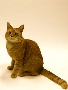 James Bowen's Street Cat Bob ♡