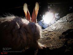 bunny by ZaferKursatBozkurt #nature #mothernature #travel #traveling #vacation #visiting #trip #holiday #tourism #tourist #photooftheday #amazing #picoftheday