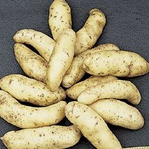 Fingerling Salad Potatoes - Long slim tubers with flavor all their own. Brought to this country by early German settlers, the finger-like tubers are about 1 inch in diameter and 2 to 4 inches in length. Skin and flesh are yellow and the flavor is delicious. Boil with the jackets on and cut up to use in salads. They are also delicious when fried.