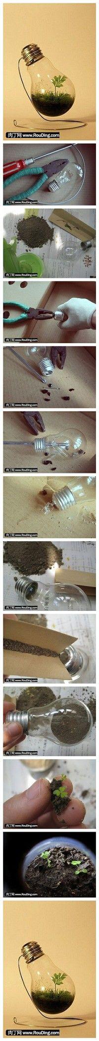 Comment faire un petit jardin dans une ampoule #DIY #Glassislife