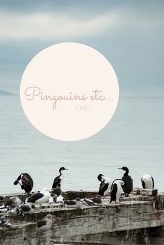 Découvrez les oiseaux du Chili en Terre de feu à partir de Punta Arenas. Parmi eux les manchots rois .... Un long road trip qui en vaut la peine