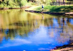 With over forty years of combined education and experience, Southern Aquatic Management, Inc. possesses the knowledge to effectively create a management program designed for your waterbody's specific needs. Call us at 407-878-6655