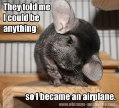 They told me I could be anything. so I became an airplane. They told me I could be anything. Funny Animal Memes, Animal Quotes, Funny Animal Pictures, Funny Animals, Cute Little Animals, Unique Animals, Animals And Pets, Baby Animals, Chinchilla Baby