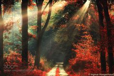 Rays of Autumn by ingmar_Hoogerhoud via http://ift.tt/1pijscn