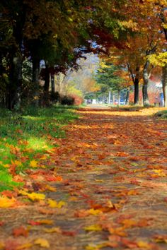 Karuizawa Autumn