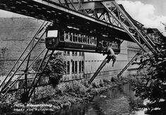 A story from the history of the Wuppertal Schwebebahn - in 1950 a young circus elephant was taken aboard as a publicity stunt, but unfortunately he didn't appreciate the journey and decided to make a bid for freedom - straight into the river. All ended well and he lived until 1989.