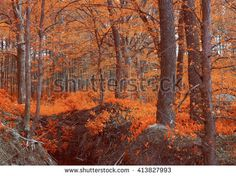 Magic autumn wood, orange. Unusual mystical nature. Young foliage and grass. Photo wall-paper, card