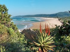 The Best Little Towns In The Western Cape 2018 – The Inside Guide Knysna, South Afrika, Namibia, Out Of Africa, Africa Travel, Beach Trip, Beautiful Beaches, Travel Inspiration, Scenery