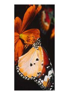 Motivdruck Schmetterling orange/bunt
