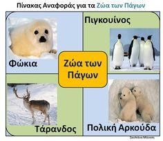 Δραστηριότητες, παιδαγωγικό και εποπτικό υλικό για το Νηπιαγωγείο: Πίνακες Αναφοράς για τα Ζώα των Πάγων