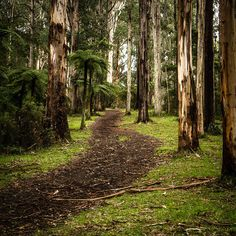 The Dandenongs, Sherbrooke Forest, Melbourne Day Trips, walking tracks in melbourne Couples Things To Do, Couple Things, Melbourne Victoria, Victoria Australia, Pinterest Photography, Australian Bush, Yarra Valley, Family Weekend, Across The Universe