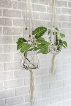 DIY Macrame Hanging Plant Holder-macrame hanging plant holders are finding their way back into our homes.