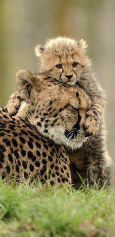 A hug for mom • photo: Waisen der Wildnis on CineFacts