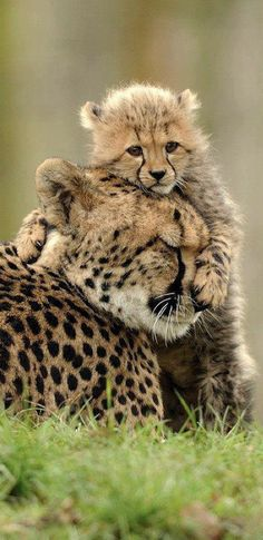 A hug for mom • photo: Waisen der Wildnis
