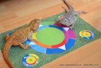 Pet 5, Pet Dogs, Composition, Carpet, Kids Rugs, Horses, Cats, Surface, Color