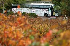 Rioja Alavesa oferta un enobús en inglés durante el mundial de 'basket' https://www.vinetur.com/2014080716383/rioja-alavesa-oferta-un-enobus-en-ingles-durante-el-mundial-de-basket.html