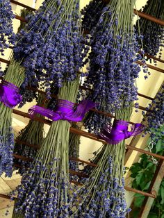 Set of 2 Dried Lavender Bouquets: by BlueMountainLavender on Etsy