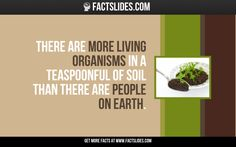 There are more living organisms in a teaspoonful of soil than there are people on earth.