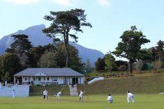 Neil catching a game.  :  Wynberg cricket, Johannesburg.