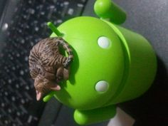 Cat on Android