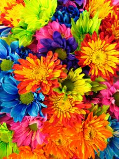 I would love to be in the middle of a field with nothing but rainbow wild flowers!