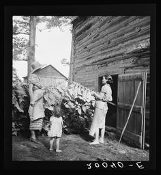 Wives of tobacco tenants pile the tobacco before the barn preparatory to firing. Granville County, North Carolina; Lange, Dorothea, photographer, July 1939  Farm Security Administration/Office of War Information Black-and-White Negatives, Library of Congress Prints and Photographs Division Washington