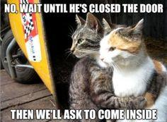 Cat Logic • again......so true!