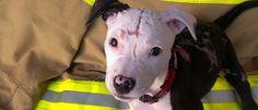 Pesquisa Não é Comigo!: Conheça Jake, o cãozinho que sobreviveu a um incên...