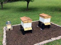 Purchasing equipment is only one part of the puzzle for a new beekeeper. Setting up a bee yard and your hives require key decisions for ultimate success. Bee Hive Plans, Honey Bee Hives, Honey Bees, Honey Bee Box, Beekeeping For Beginners, Raising Bees, Bee Boxes, Bee Hives Boxes, Bee Farm