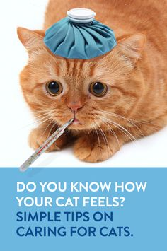 For a great list of cat care tips every cat owner should know, click here.