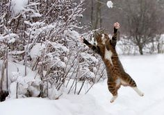 "❦  ""I got it"" - fun in the snow"