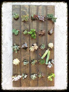 garden blog, san diego garden blog, garden and bliss, organic gardening, gratitude, spiritual enlightenment, edible landscaping