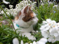 Katze Lilly in den Blumen