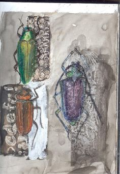 Sue Brown Printmaker Brown Bugs, Bug Art, Collagraph, Insect Art, Brown Art, Art Thou, Beautiful Bugs, Paper Artist, A Level Art