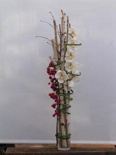 Elegant wh birch