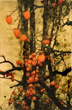 1000 Images About Colors Of Persimmon On Pinterest