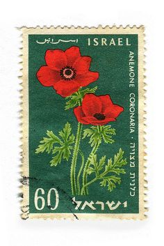#Israel: Anemonen, überall :-)