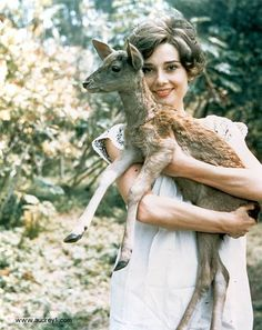Audrey Hepburn - a beautiful and talented lady who always stayed true to herself. She had compassion and served children in impoverished places. She also had a pet deer :] Cute picture of her. Audrey Hepburn, Pet Deer, Baby Deer, Cinema, My Fair Lady, Beautiful Lips, Hello Beautiful, Oui Oui, Classy Women