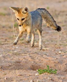 Digital Wild:Cute foxie by Hendri Venter