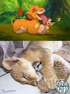 Simba et Timon, je vous aimeeeeeee!!!