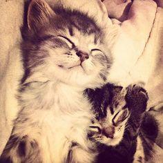 The #kittensofinstagram kitten of the day @iamnorbertthecat 😻❤ #cute #adorable #sweet #little #kitten #baby #cat #cat #instafollow #cats #animals #tagsforlikes