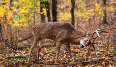 A truly mature whitetail is practically a different animal, and you need to hunt differently to tag one. Here's how