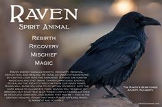 When the Raven appears, MAGIC is imminent.