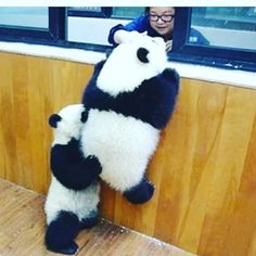 Tagged with panda, aww, real love, pandacam link in description; Shared by RamonaQ. If you are sad, here is a helpful panda. And a pandacam link. Super Cute Animals, Cute Little Animals, Cute Funny Animals, Niedlicher Panda, Panda Love, Panda Bears, Cute Panda Baby, Panda Mignon, Amor Animal