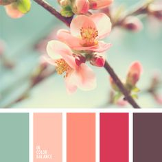Pastel shades of cherry blossom should be applied in the interior of a young girl's room. This palette is soft, yet far from princess pink at the same time. Colour Pallete, Colour Schemes, Color Patterns, Color Combos, Color Palettes, Pastel Shades, Pastel Colors, Pastel Blue, Coral Color