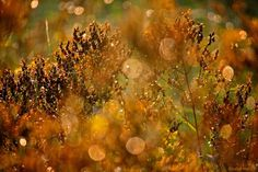 Fleurs sauvages - Parc du Pas du Loup