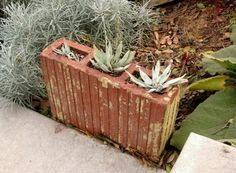 Use a terracotta tile to plant in along some steps