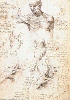 Leonardo Da Vinci-Les études anatomiques de  une  masculins  accotement